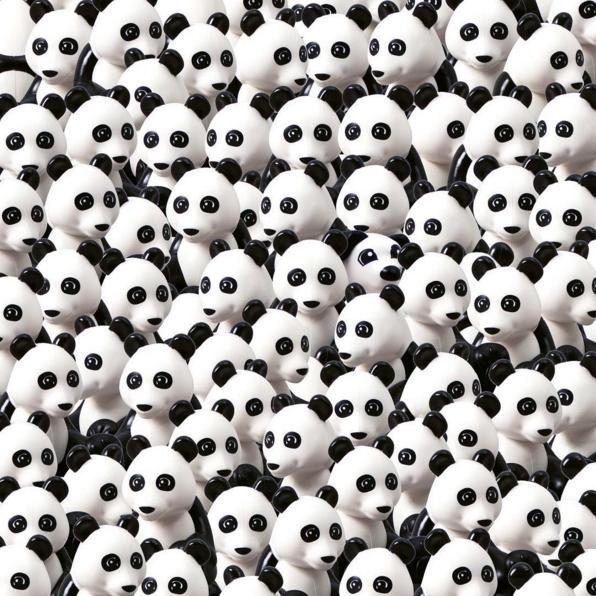cane_panda