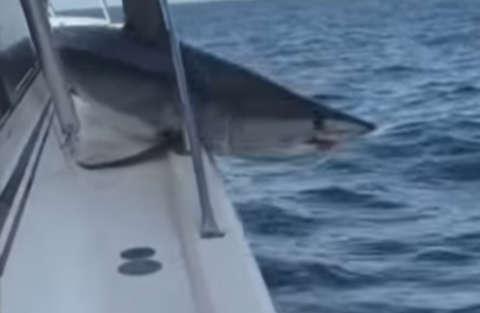 Lo squalo incastrato sulla barca del pescatore e le polemiche