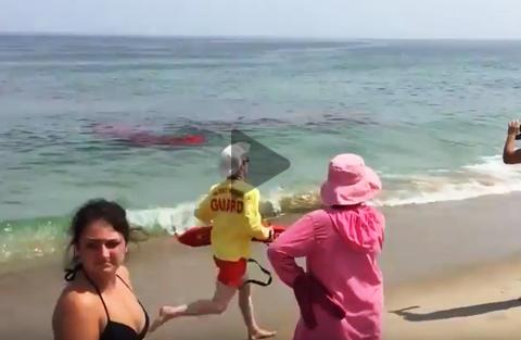 squalo-sulla-riva