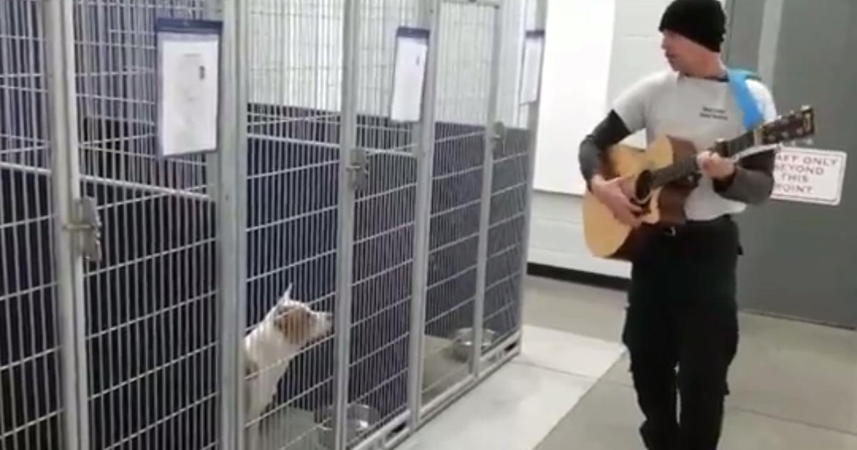 Suona per i cani del rifugio, la reazione è dolcissima