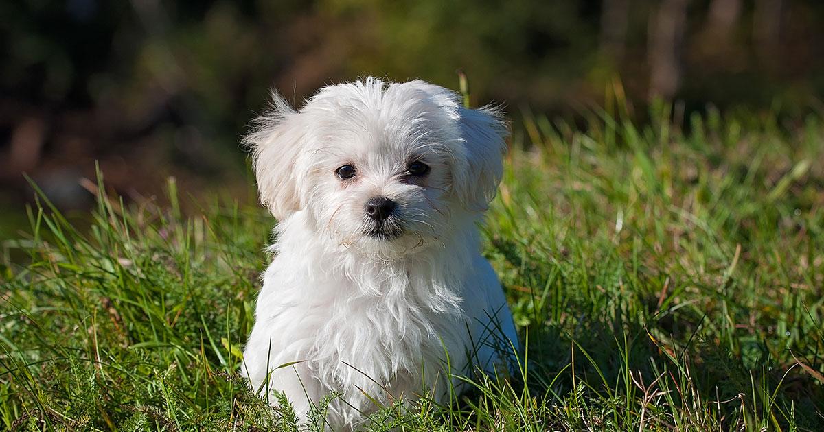 A Milano un uomo lascia 1 milione di eredità al proprio cane