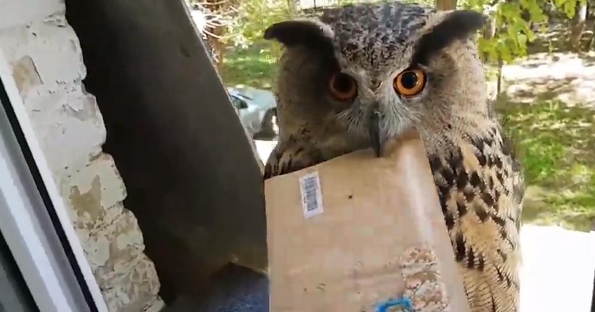 Proprio come Harry Potter: il G.U.F.O. consegna la posta