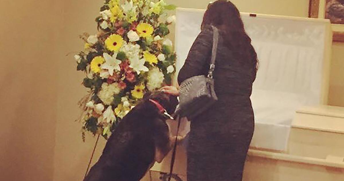 Il cane, il suo compagno umano e quell'ultimo commovente saluto