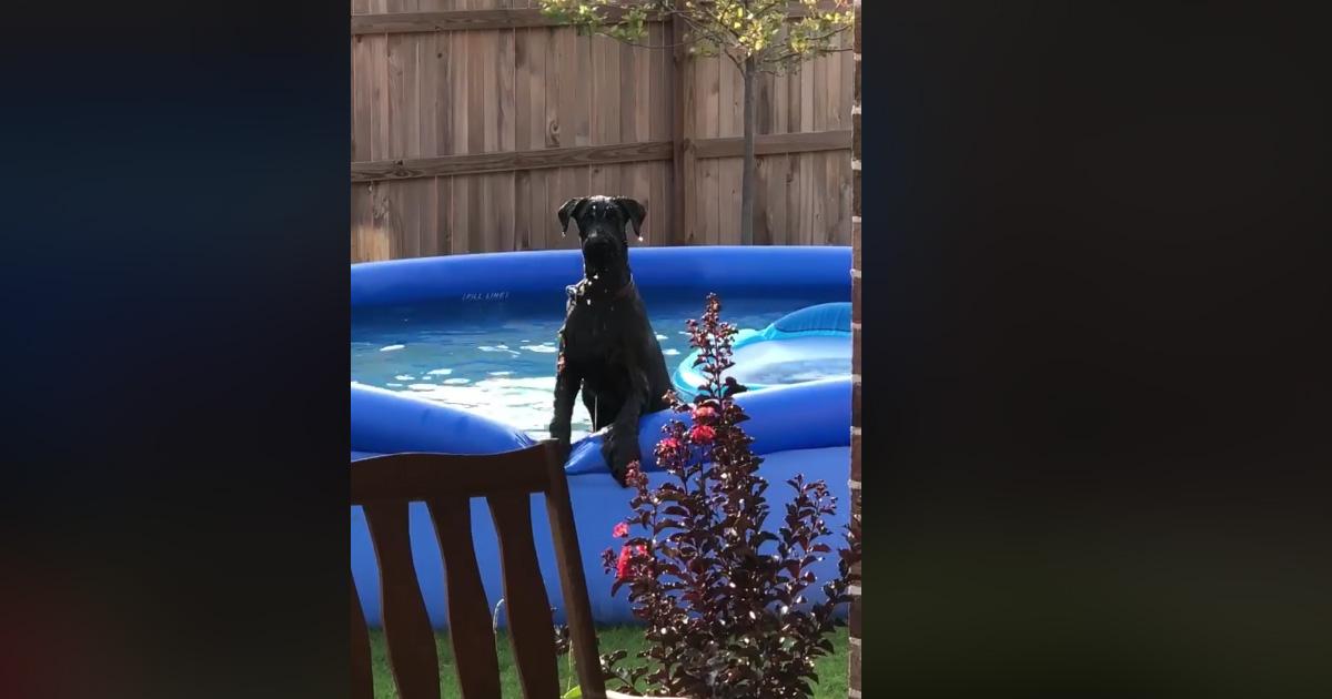 Il cane sa di averla fatta grossa: ma la reazione è da ridere