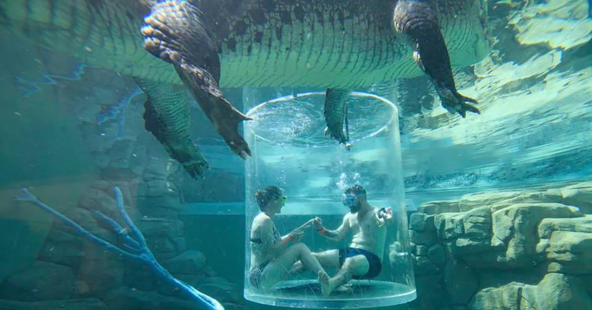 Da non crederci: lui le chiede la mano accerchiato dai coccodrilli