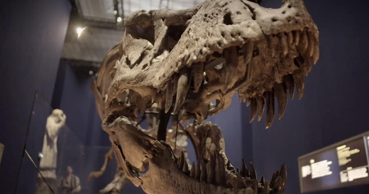 Lei è Trix, una femmina di T-Rex in mostra a Parigi