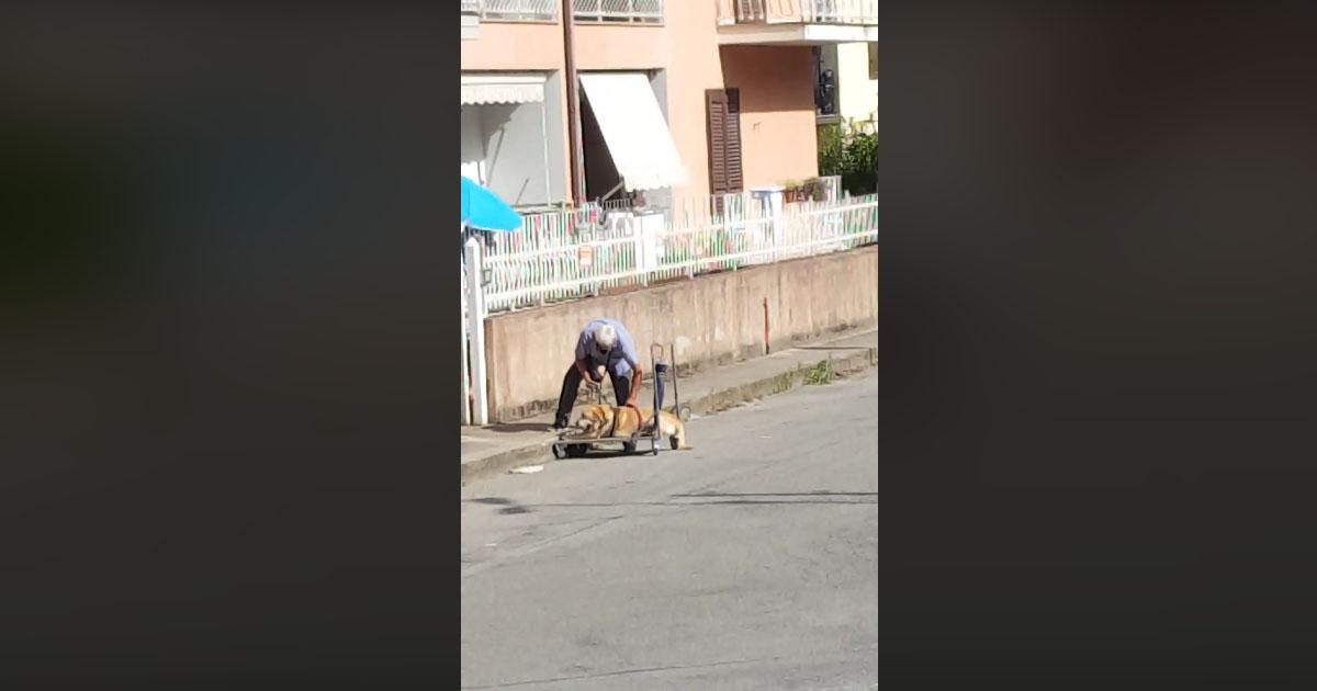 Amici per sempre: il video di un anziano e del suo cane malato commuove