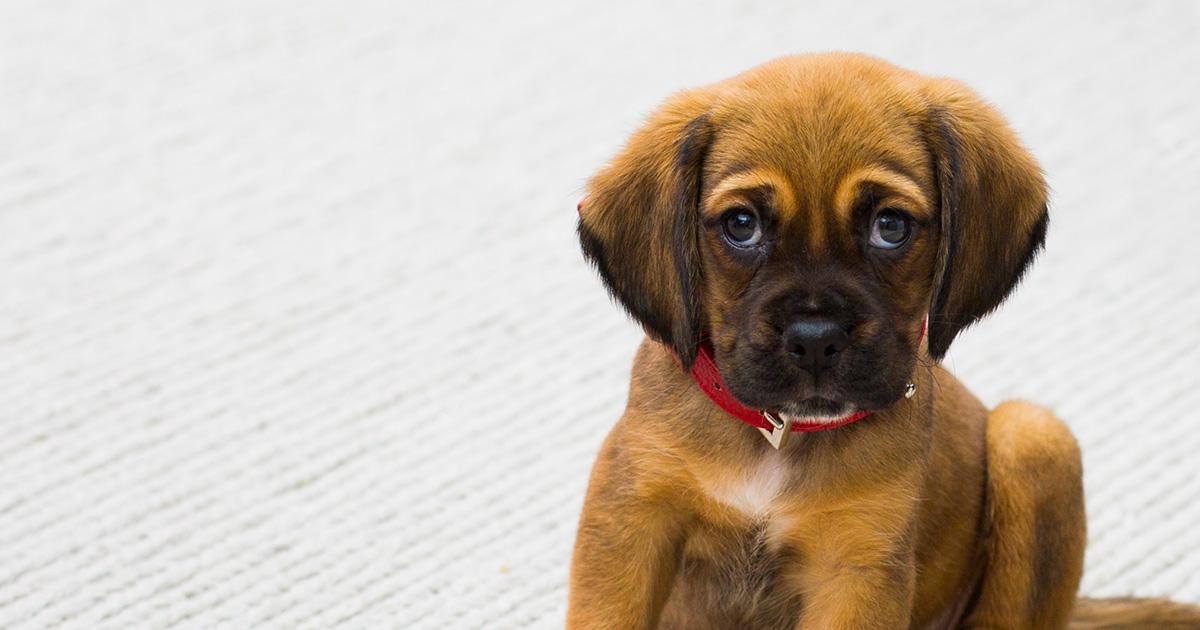 Possiedi un cane? Felice e in salute, lo spiega la ricerca