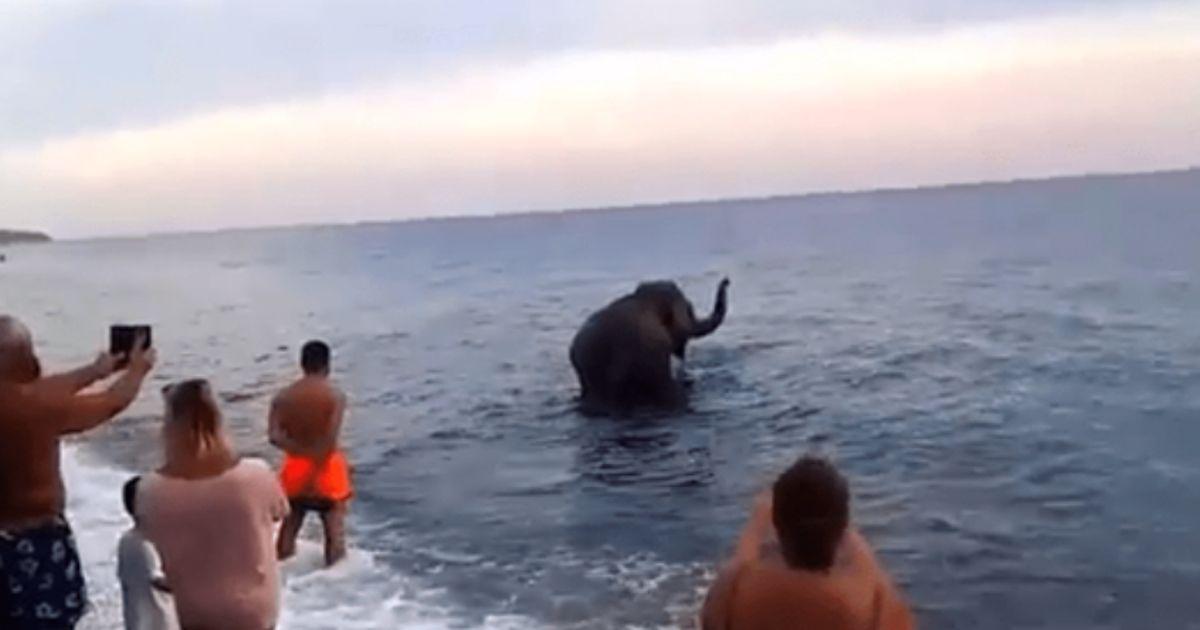 C'è un elefante in mare, le immagini sorprendono tutti