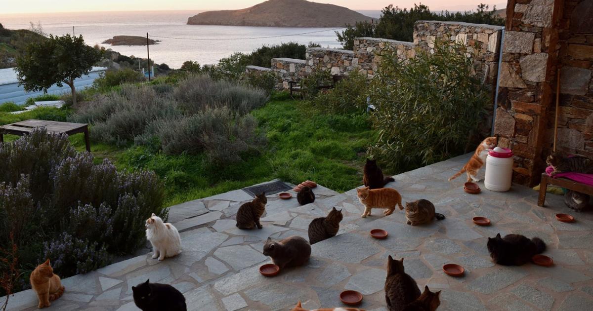 Lavoro anti-stress: accarezzare gatti su un'isola greca