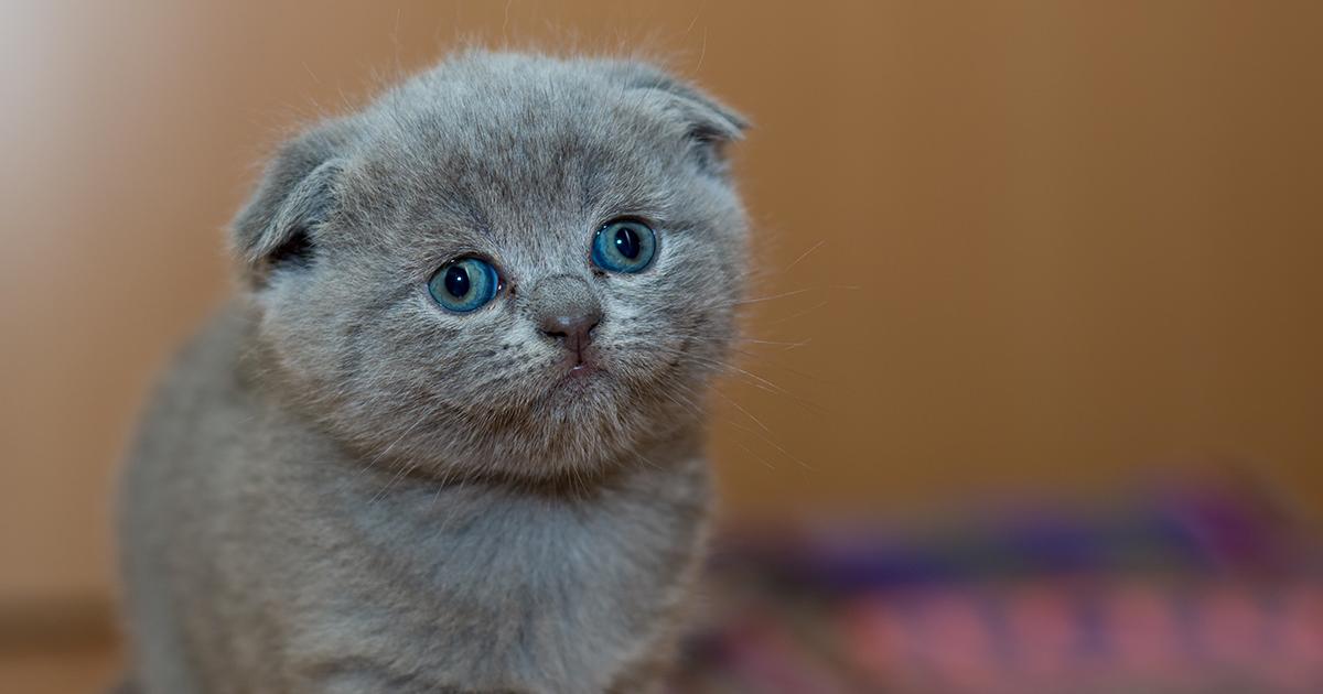 Avere un gatto fa bene al cuore e all'umore