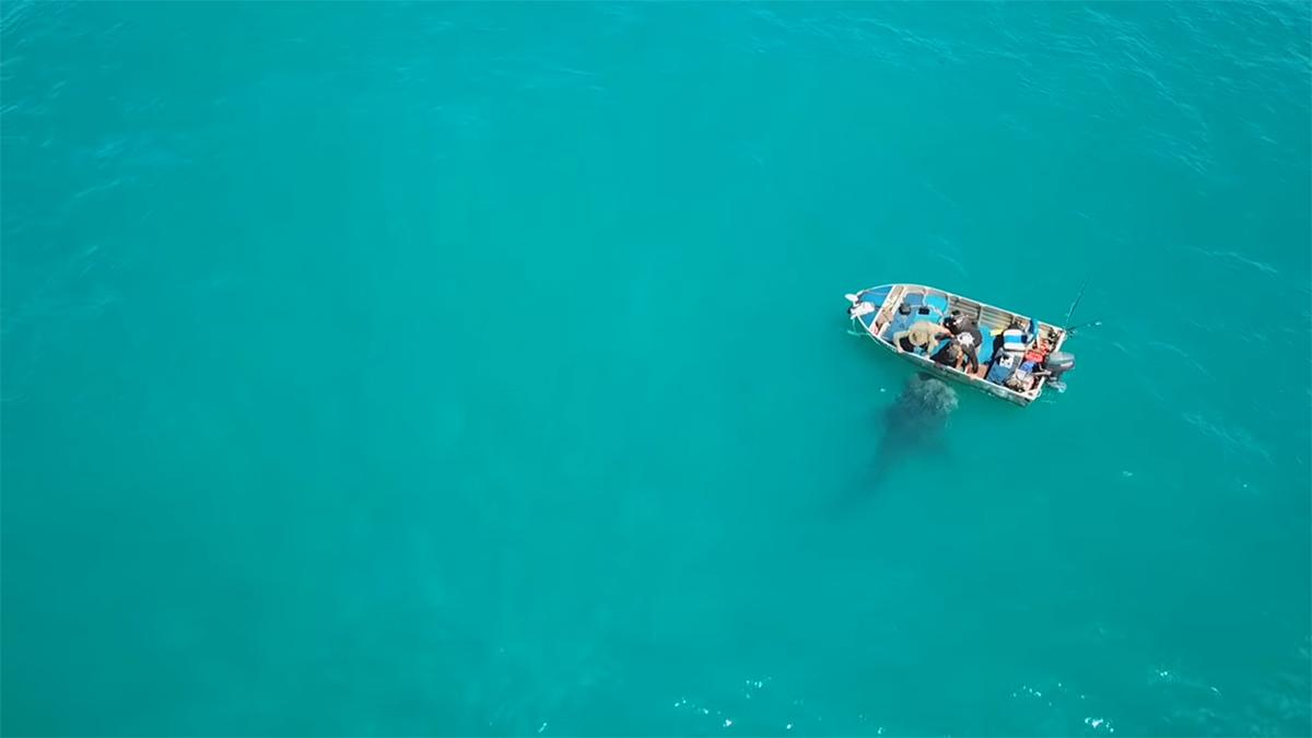 Lo squalo balena si avvicina dolcemente ai pescatori
