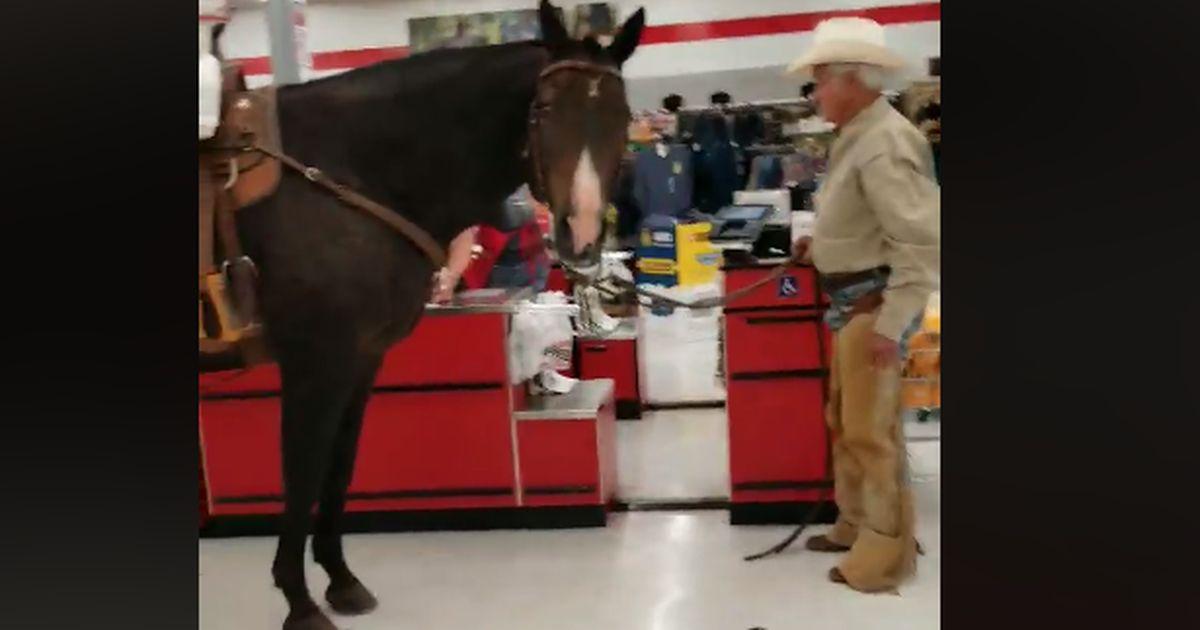 Entra nel supermercato con il cavallo, gli animali sono ammessi