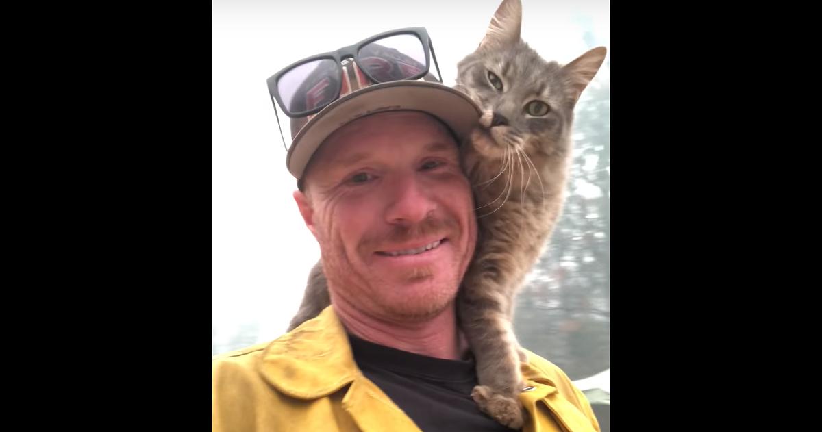 California: un pompiere salva un gatto dall'incendio, lui non lo lascia più