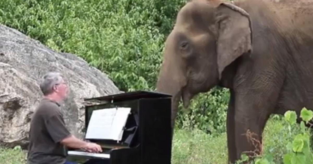 Debussy al pianoforte per l'elefante cieco...