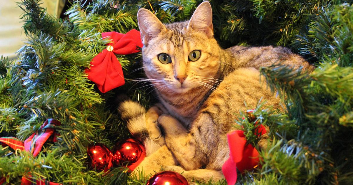 In vendita l'albero di Natale perfetto per chiunque abbia un gatto