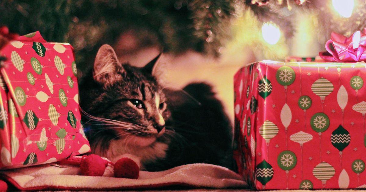 Il gatto entra nello scatolone e viene spedito per sbaglio a mille chilometri da casa