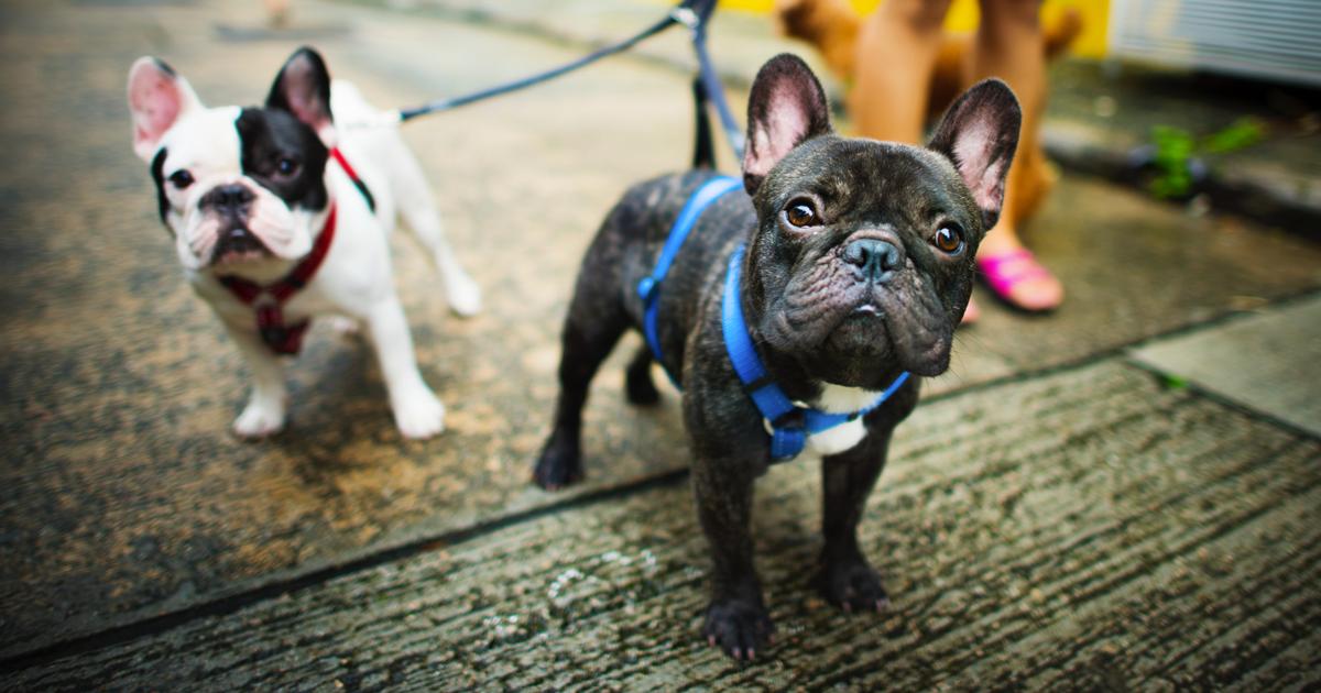No, l'Accademia della Crusca non ci autorizza a scrivere 'scendi il cane'