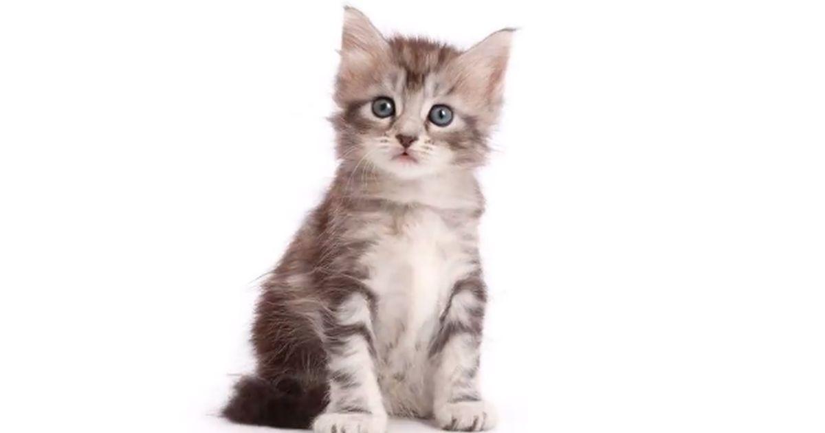 Da micino a gatto adulto in 20 secondi: un time-lapse che vi sorprenderà