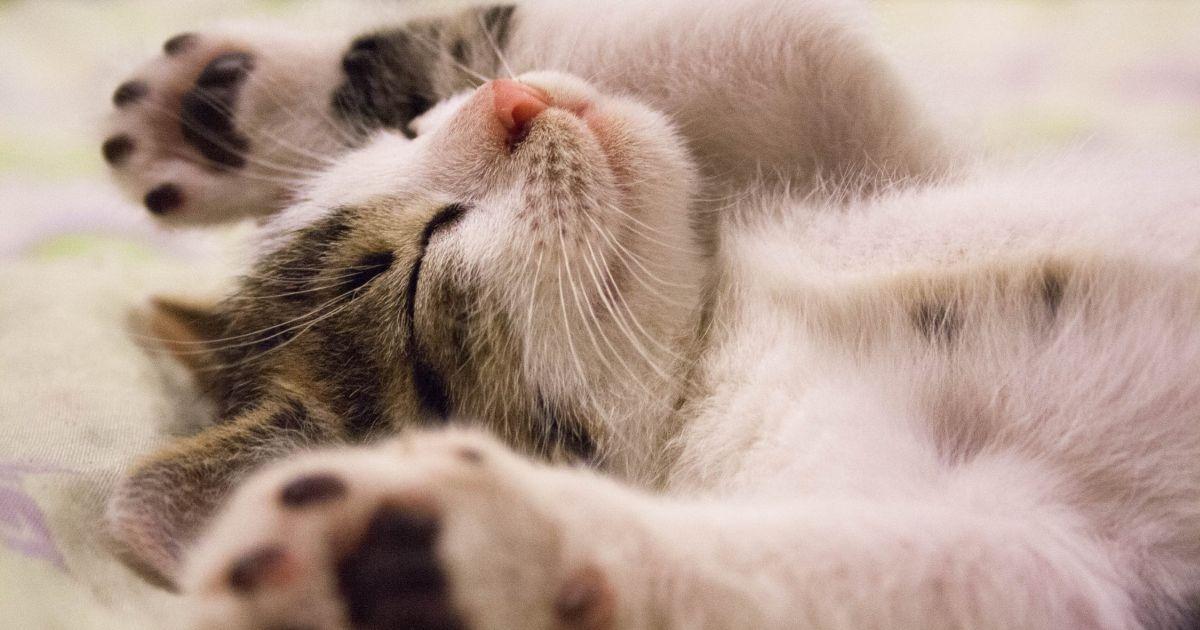 Nevrotico o socievole, tale gatto tale proprietario
