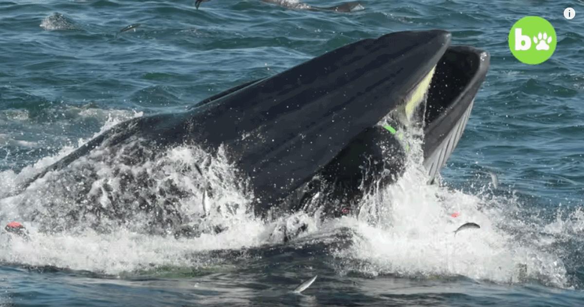 Come Pinocchio: un sub viene inghiottito vivo da una balena ma ne esce illeso