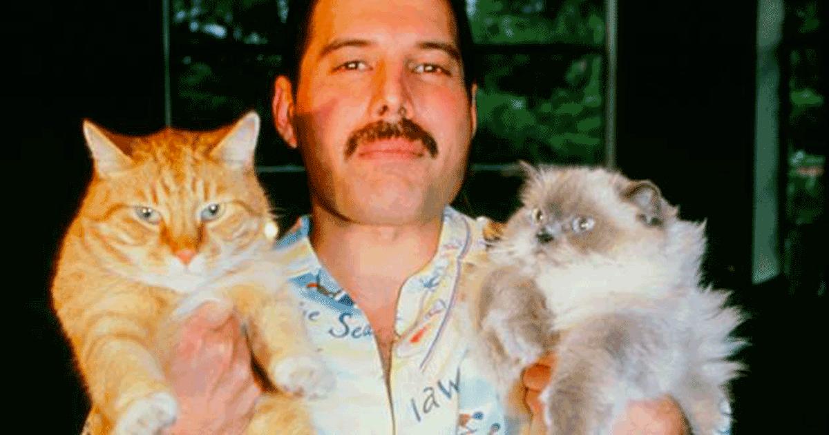 Mary Austin e l'eredità di Freddie Mercury: «Mi hai lasciato un fardello troppo grande»
