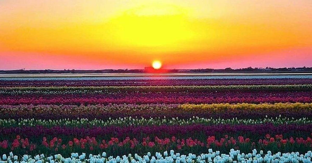 I social innamorati dell'Olanda: ecco le splendide foto dei suoi colori