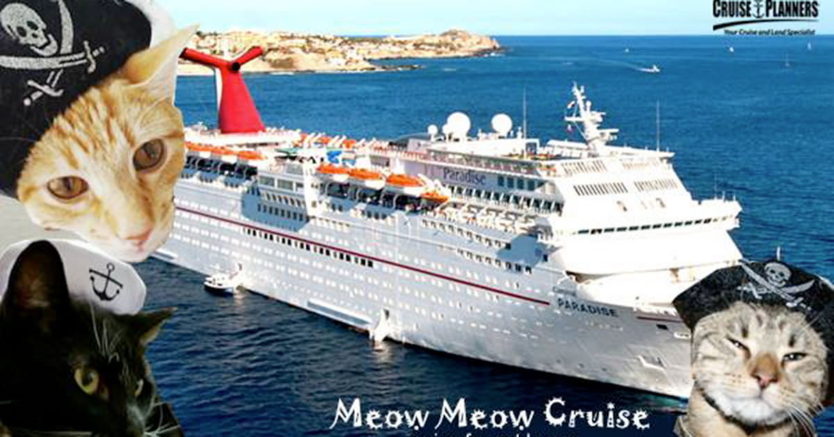 Si chiama Meow Meow Cruise ed è la crociera dei sogni per gli amanti dei gatti