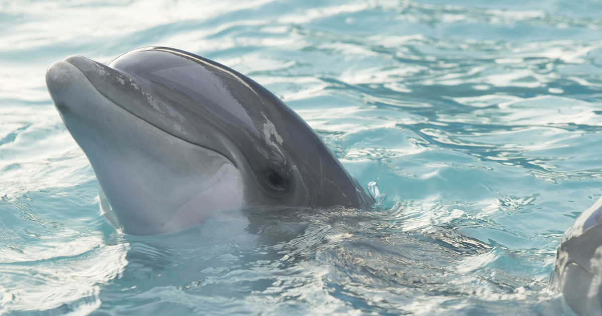 Arriva a Dubai la delfino terapia: frutto degli studiosi italiani