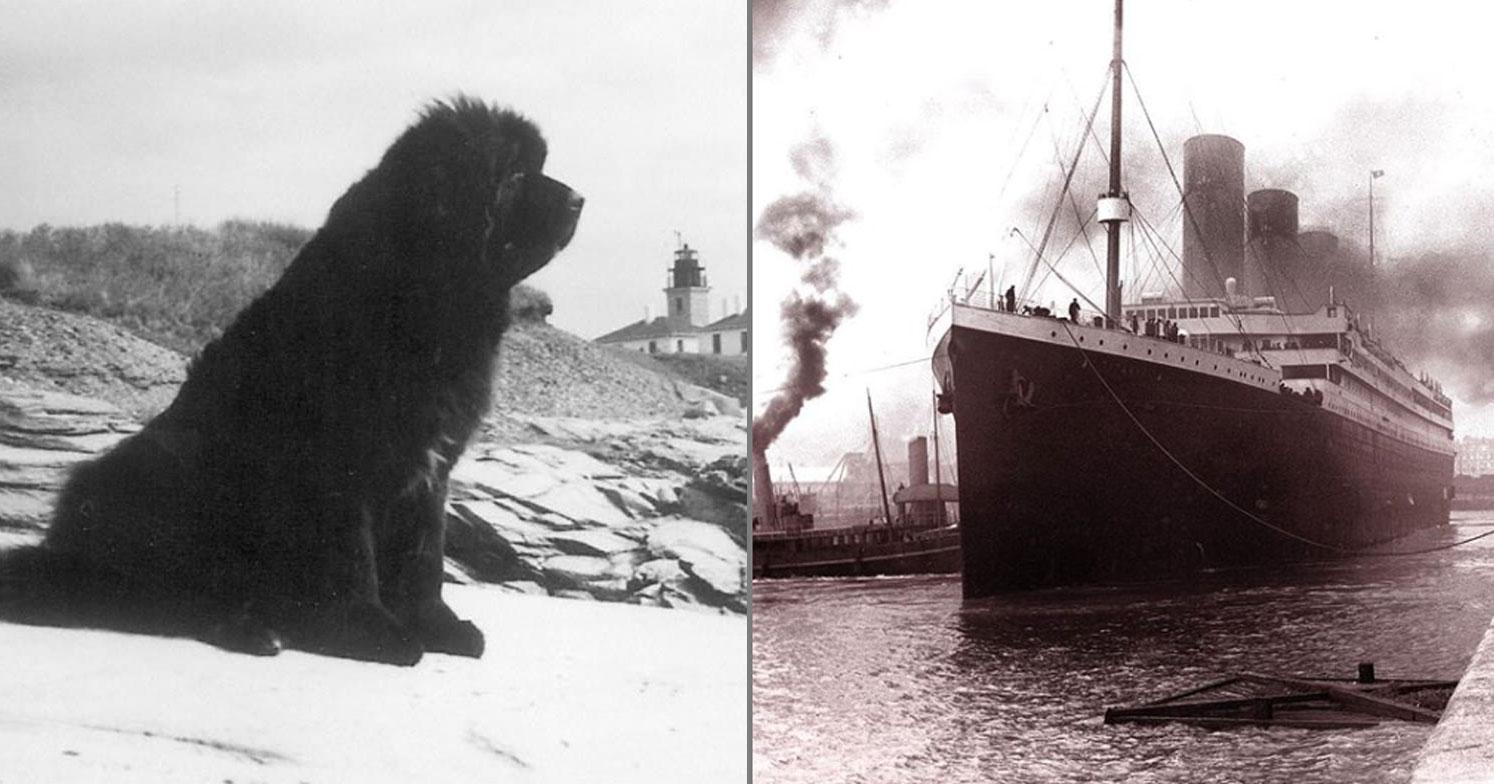 La leggenda di Rigel, il cane che salvò una scialuppa del Titanic