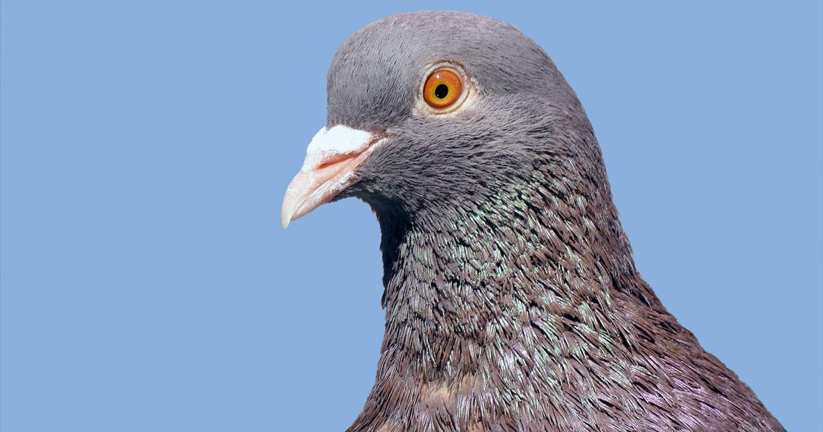 Il piccione supera il limite di velocità: ecco la foto dell'autovelox