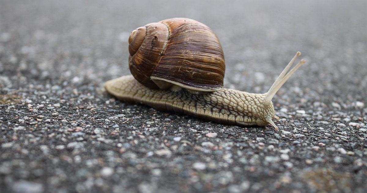 Cinque minuti di lentezza al giorno possono fare la differenza, ecco perchè
