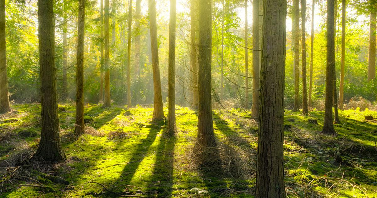 """Il 'bagno nel verde dei boschi"""" è un toccasana: ecco i parchi naturali più belli d'Europa"""