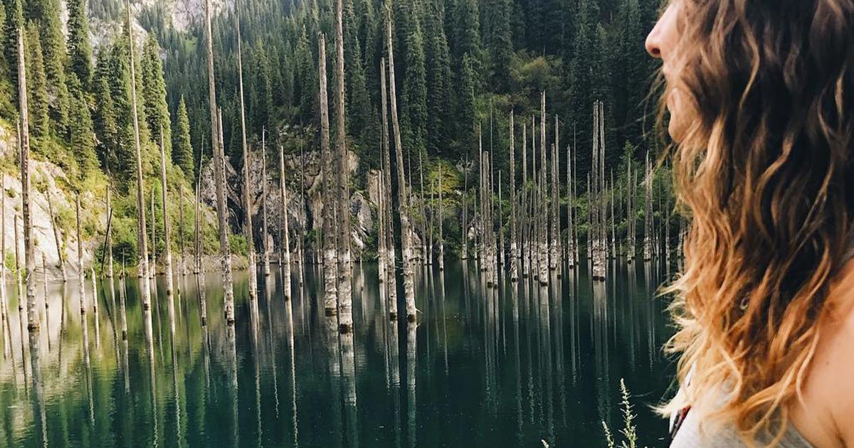 La foresta marina dove gli alberi crescono al contrario