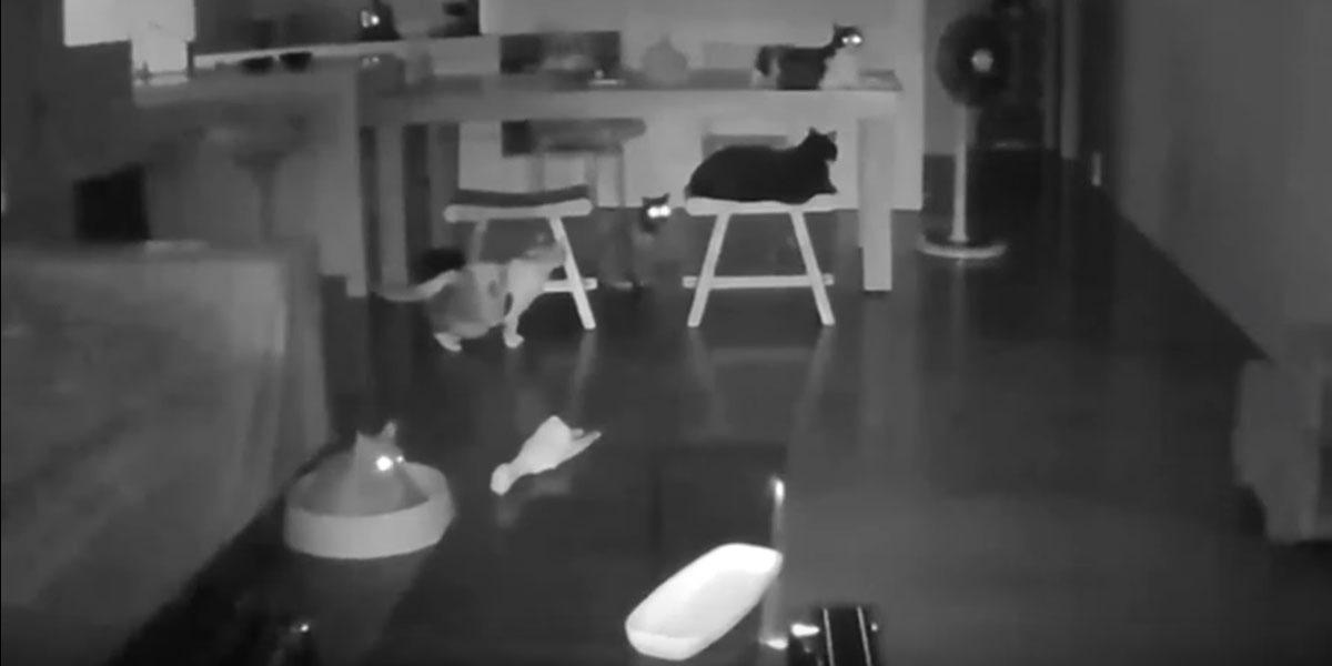 Taiwan: ecco come reagisce un gruppo di gatti alle scosse del terremoto