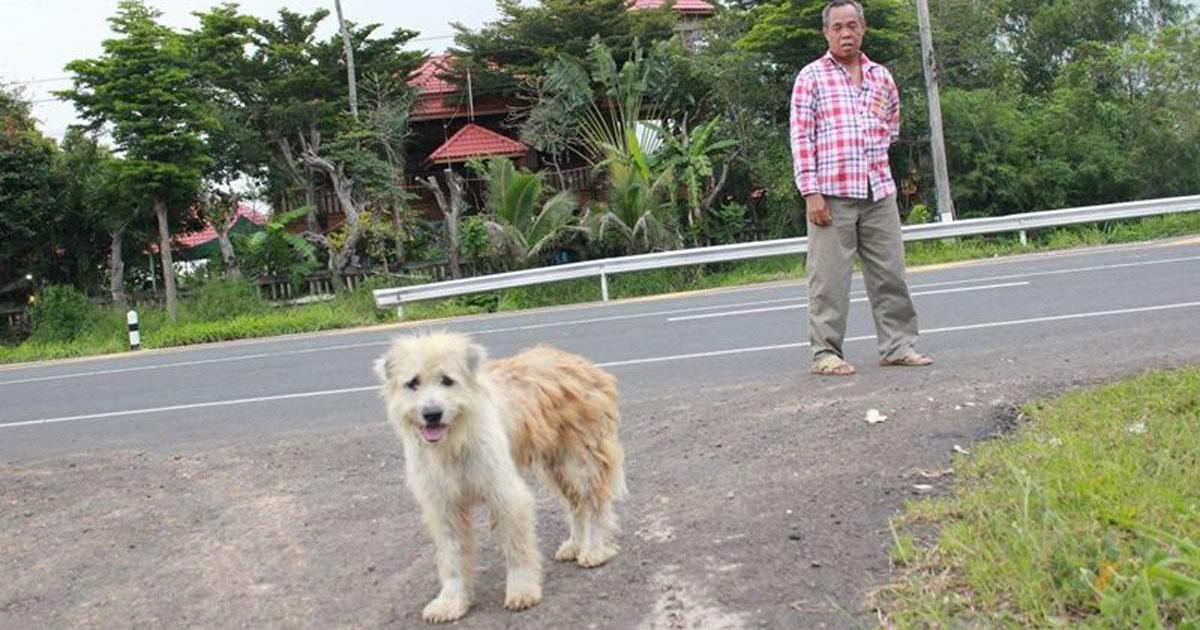 Aspetta i proprietari per quattro anni nello stesso posto: la storia di questo cane vi commuoverà