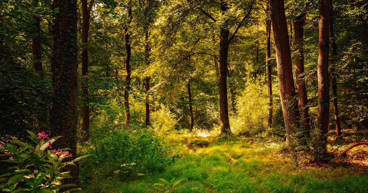 L'Irlanda pianterà 440 milioni di alberi per far fronte ai cambiamenti climatici