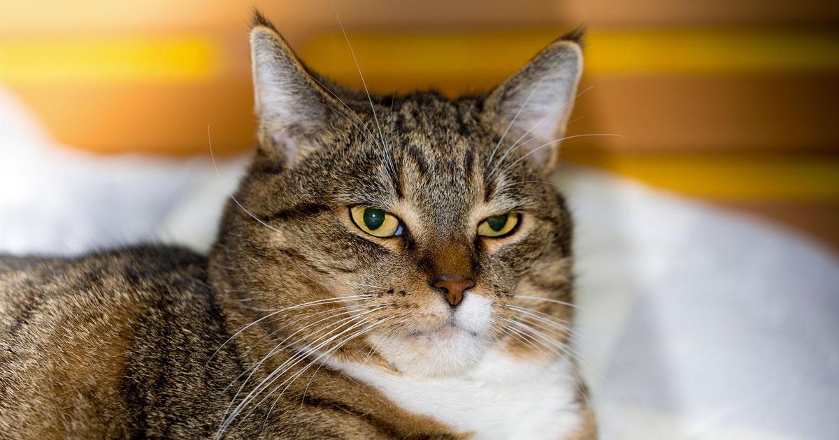 Anche i gatti vogliono bene ai loro proprietari: lo dice la scienza