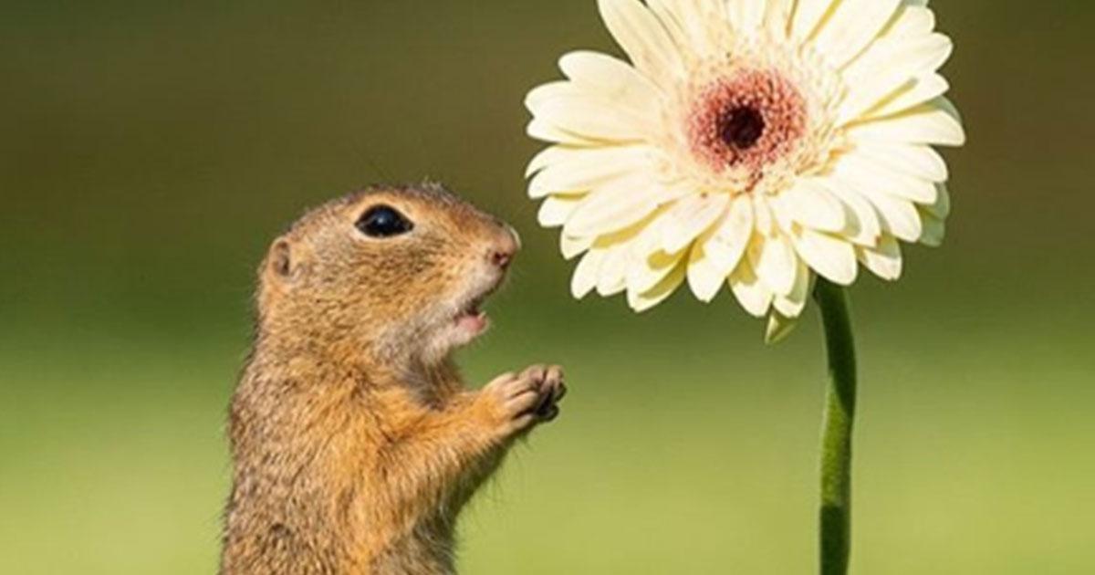 Lo scoiattolo che annusa i fiori: le straordinarie foto