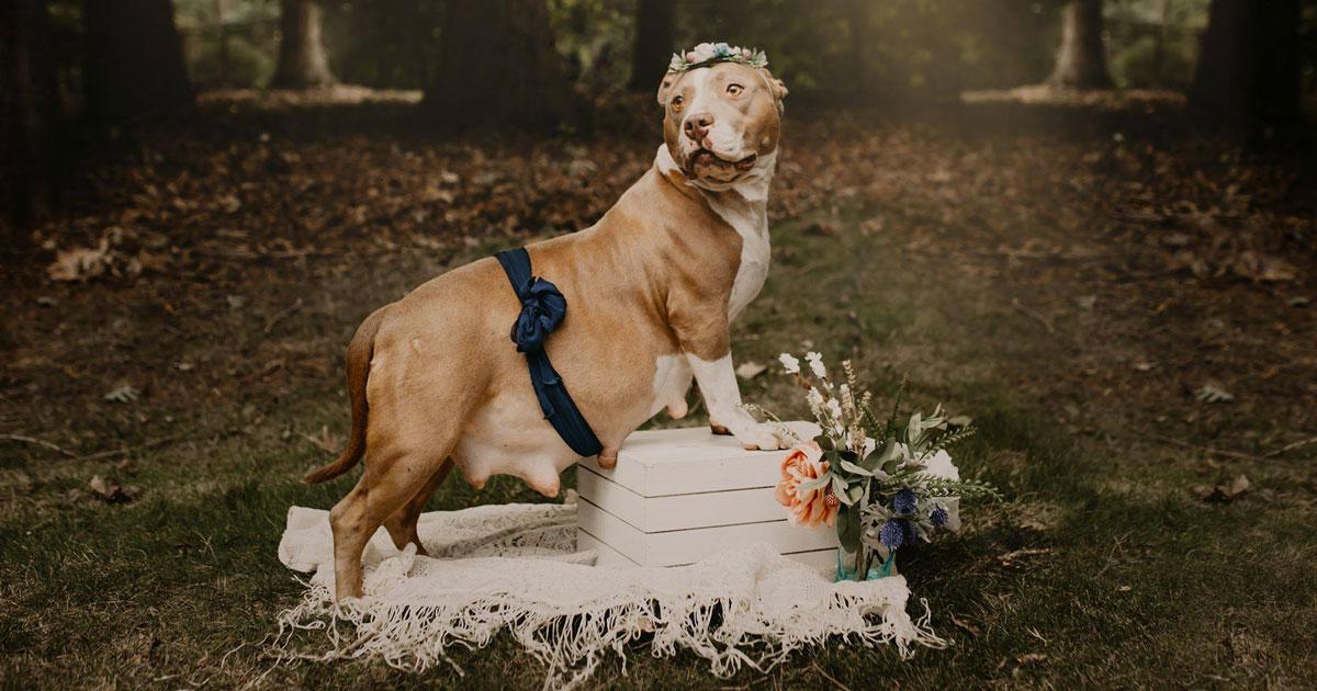 Hanno regalato un servizio fotografico a questa cagnolina per farle trovare una nuova famiglia