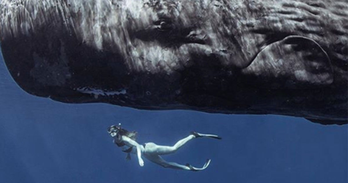 Faccia a faccia con la balena: il video