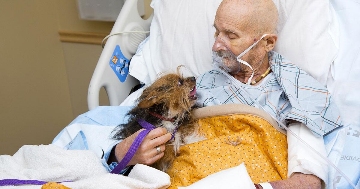 Il veterano in fin di vita abbraccia per l'ultima volta il suo cane: la foto è commovente
