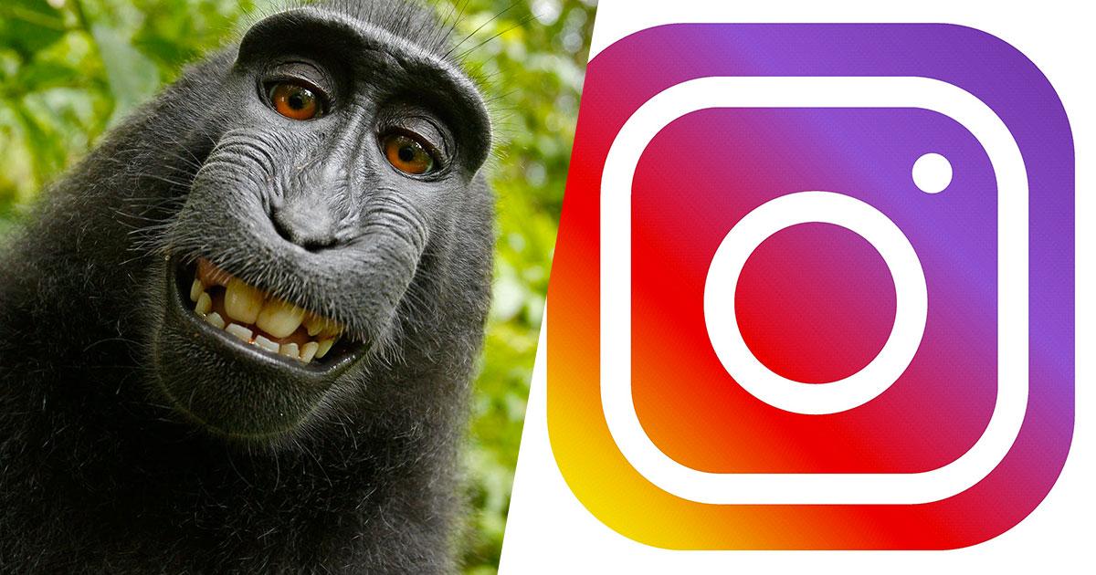 Instagram: il nuovo filtro per scoprire quale animale ti somiglia di più