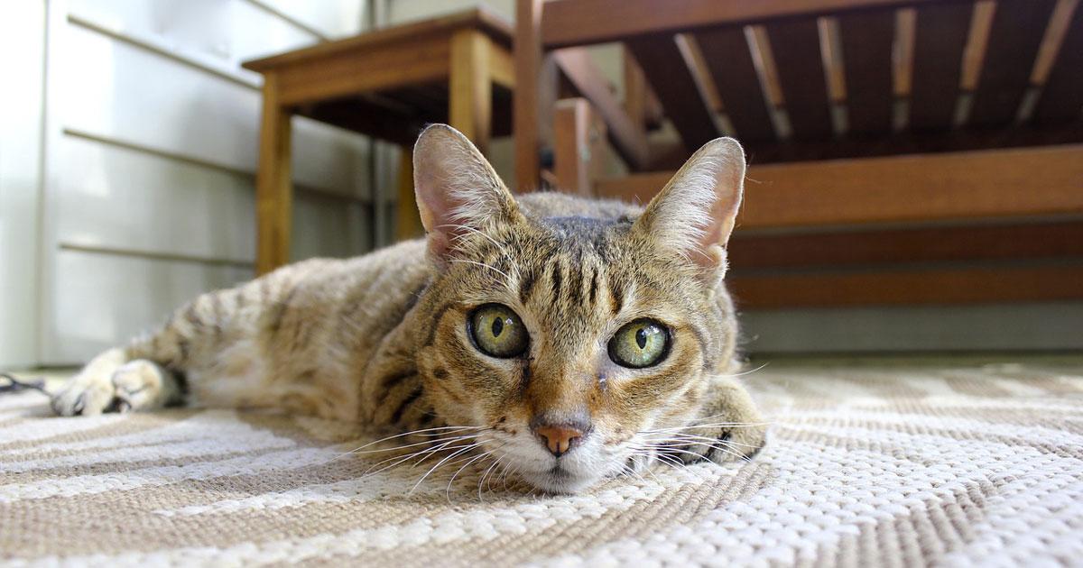 Ci sono persone che riescono a comunicare con i gatti: lo dice la scienza