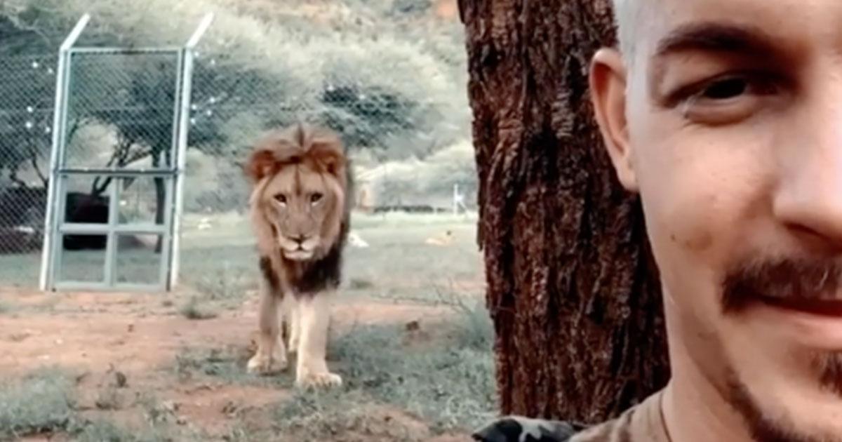 Sudafrica, mentre fa un video-selfie spunta un leone alle sue spalle, il finale stupisce tutti
