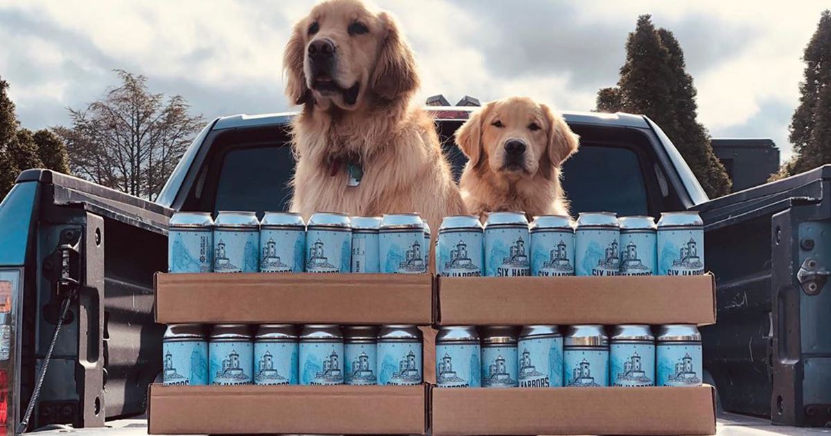 Buddy e Barley, golden retriever, consegnano la birra a domicilio
