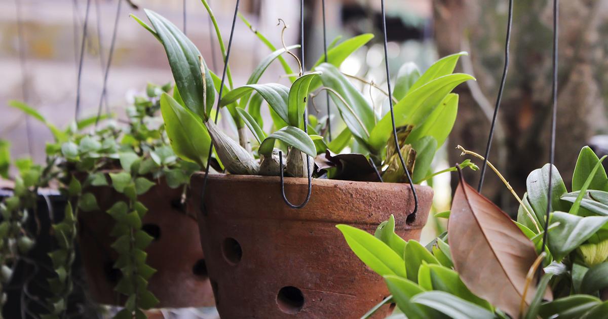 Arriva la clinica per curare le piante abbandonate nelle aziende durante il lockdown