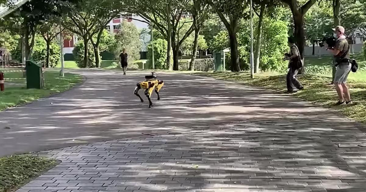 I cani-robot in giro nei parchi per controllare il distanziamento sociale