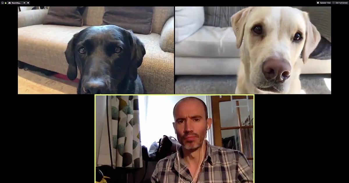 Riunione di lavoro in video conferenza...con i suoi cani. Il video del giornalista è divertentissimo