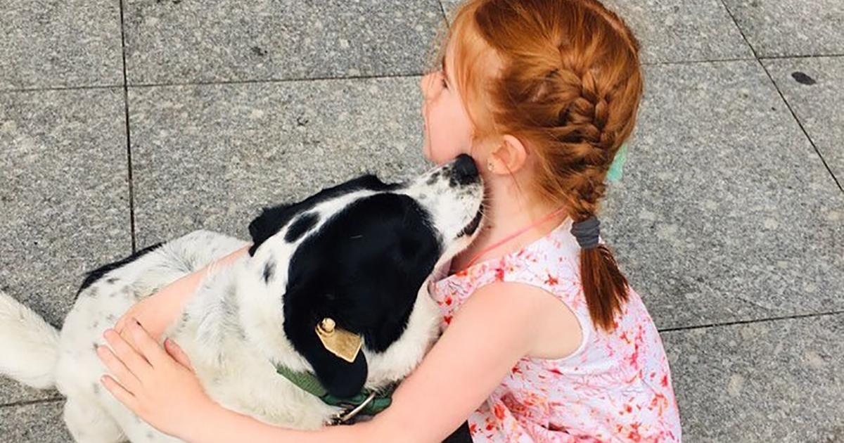 Kupata è un cagnolino dolcissimo che aiuta i bambini ad attraversare la strada in sicurezza